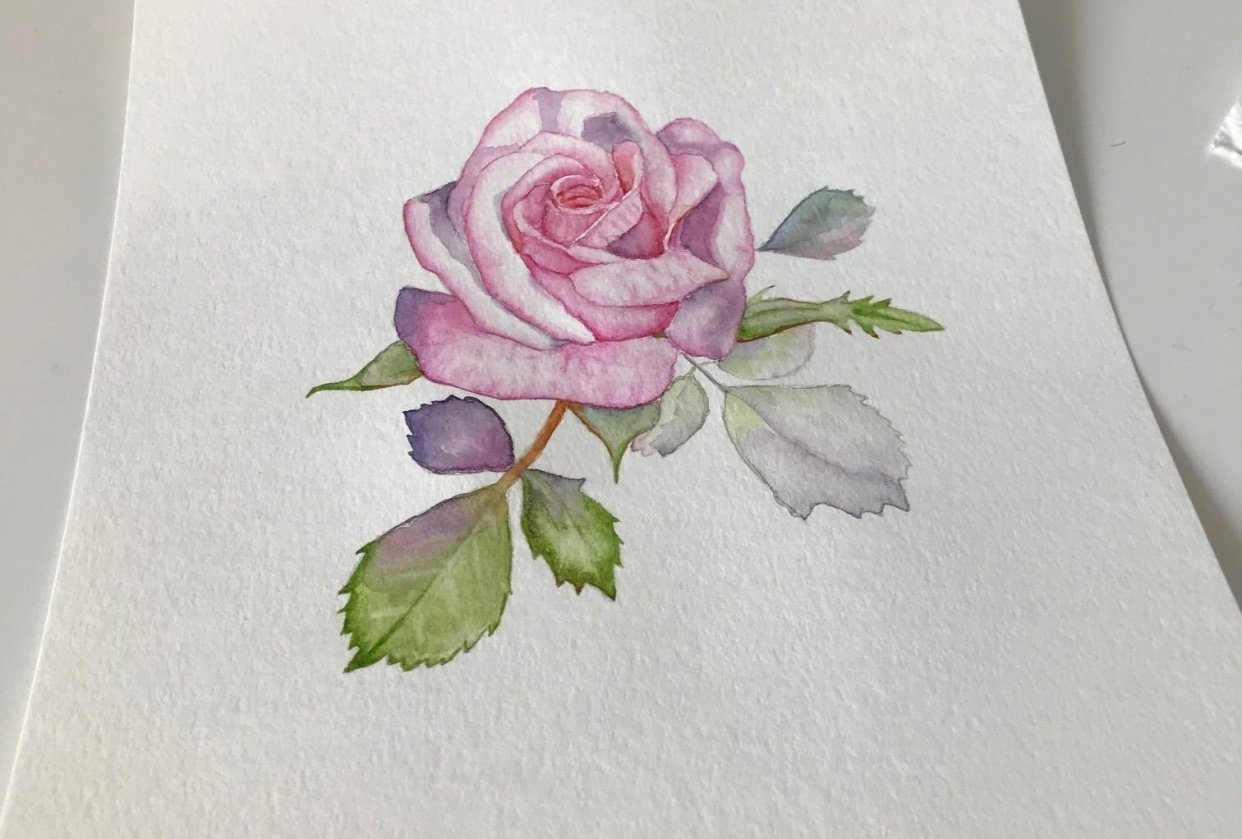 My Rose - student project