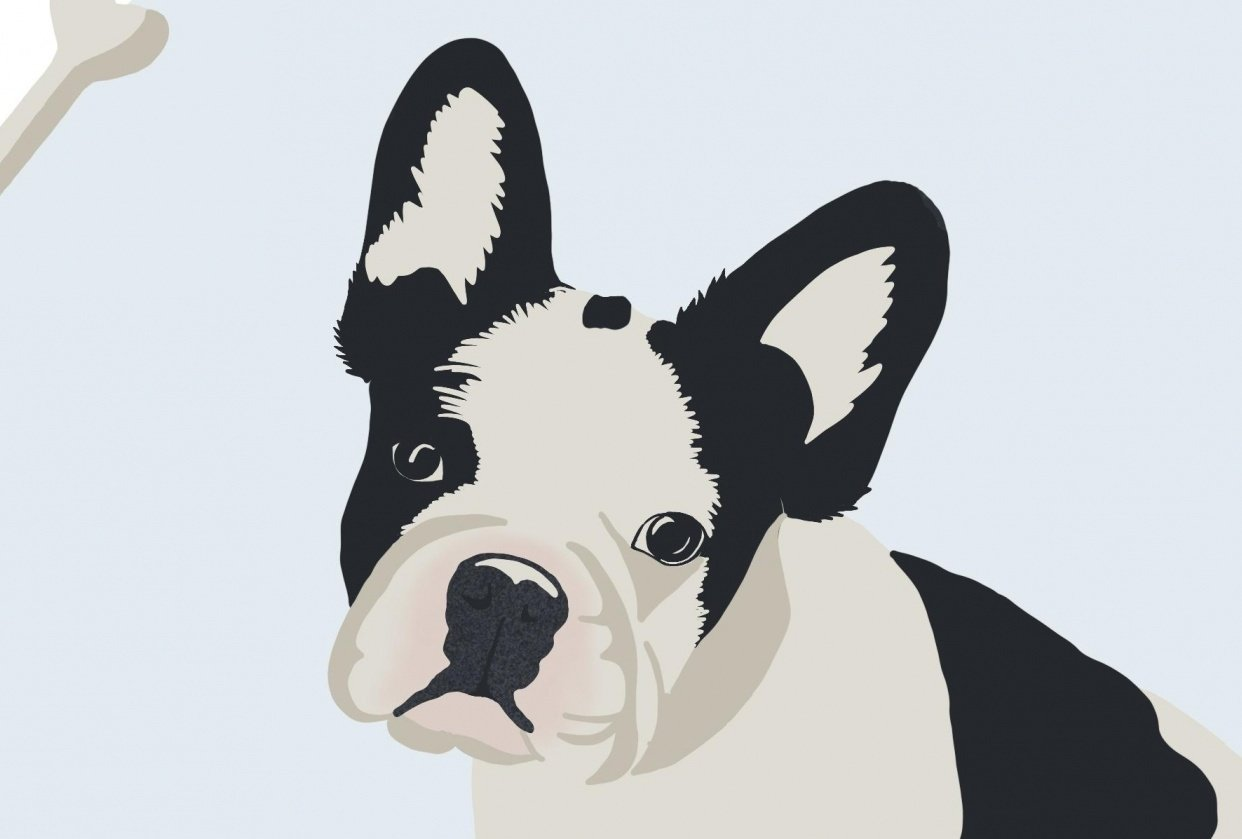 Cute Dog - student project