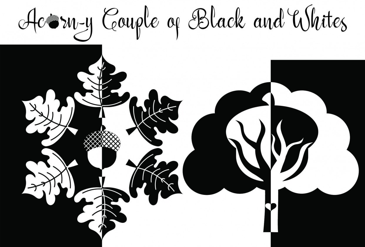 Acorn y couple of black n whites - student project