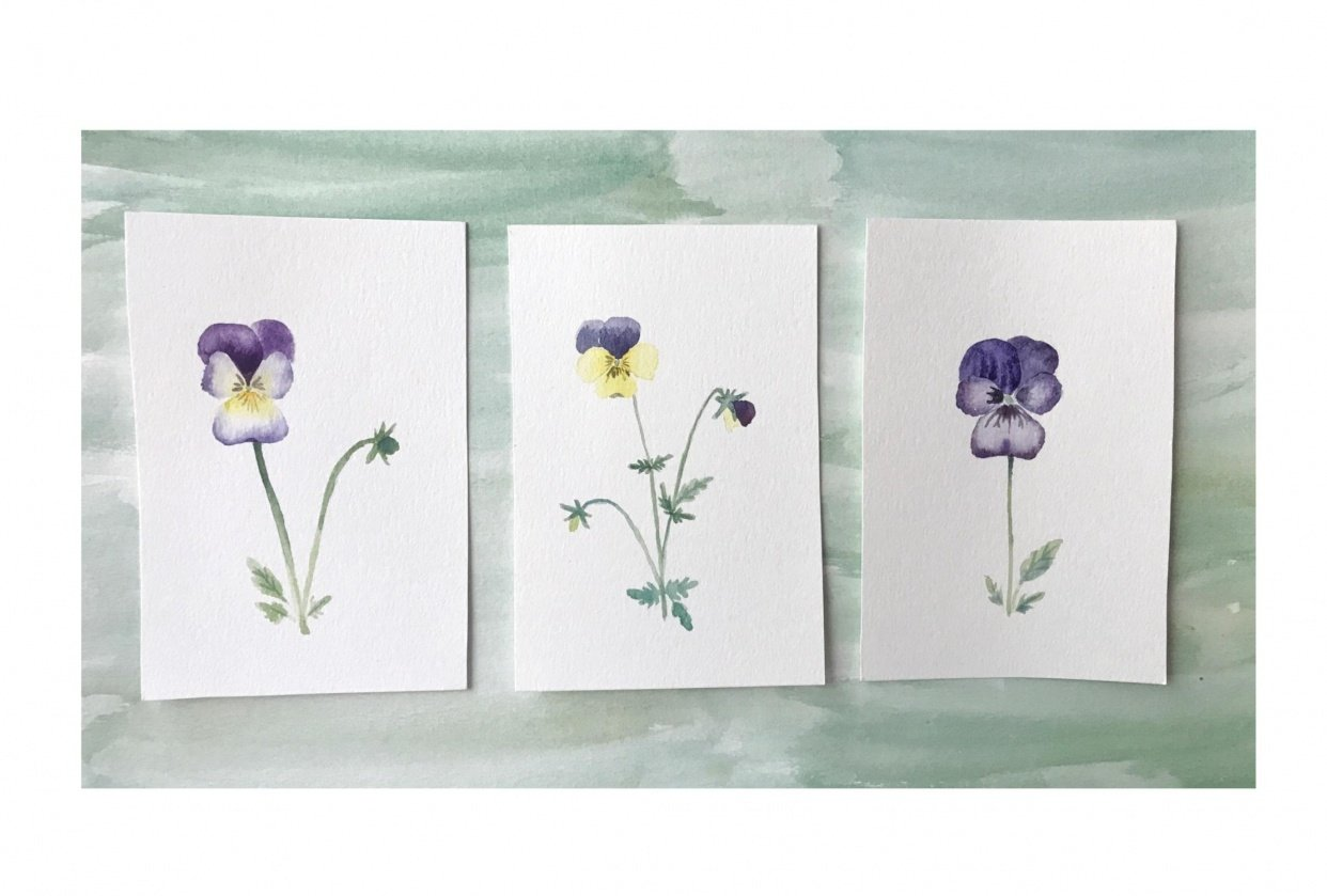 Viola flowers trio - student project