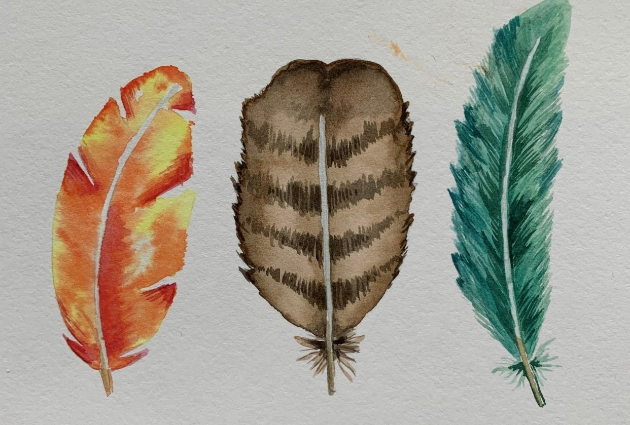 A few feathers to tickle your fancy! - student project