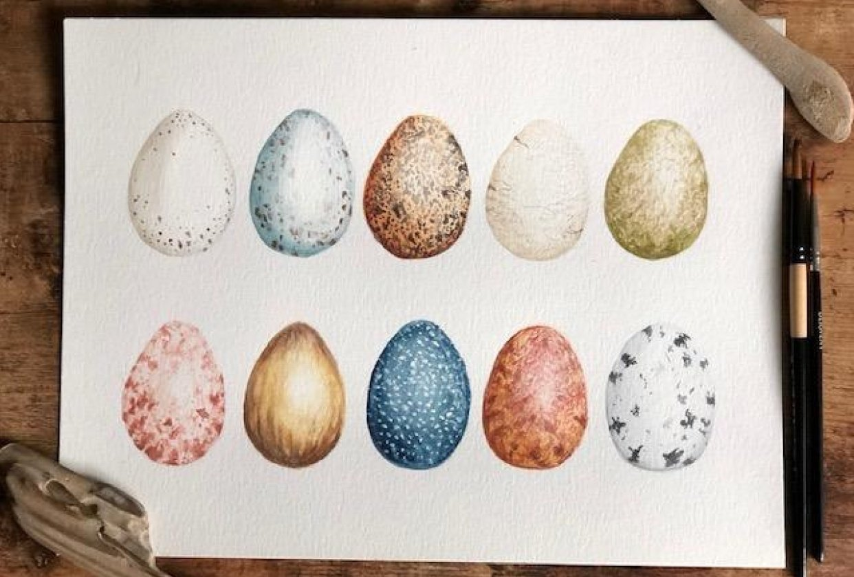Bird Eggs - student project