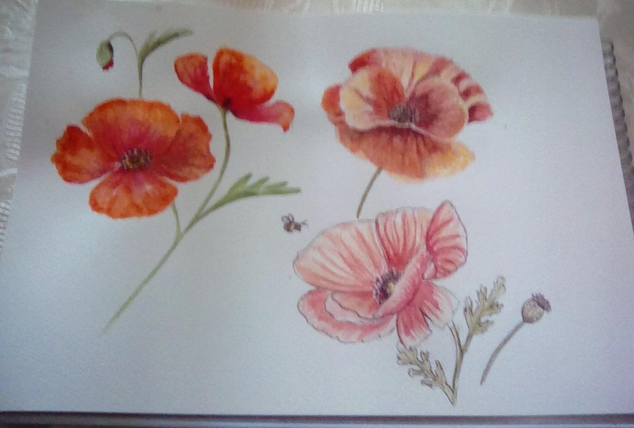 3 poppies - student project