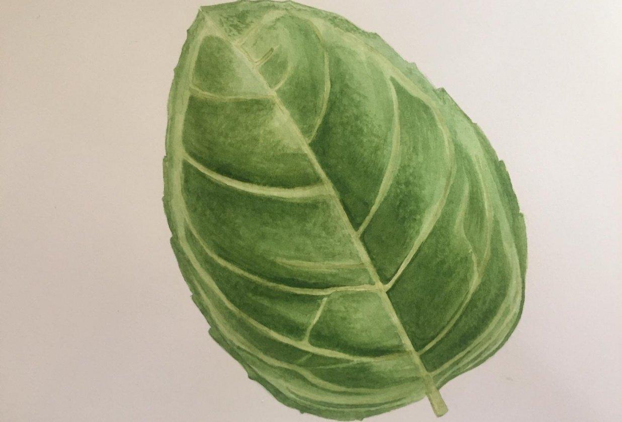 My Beginning Watercolor Portfolio - student project