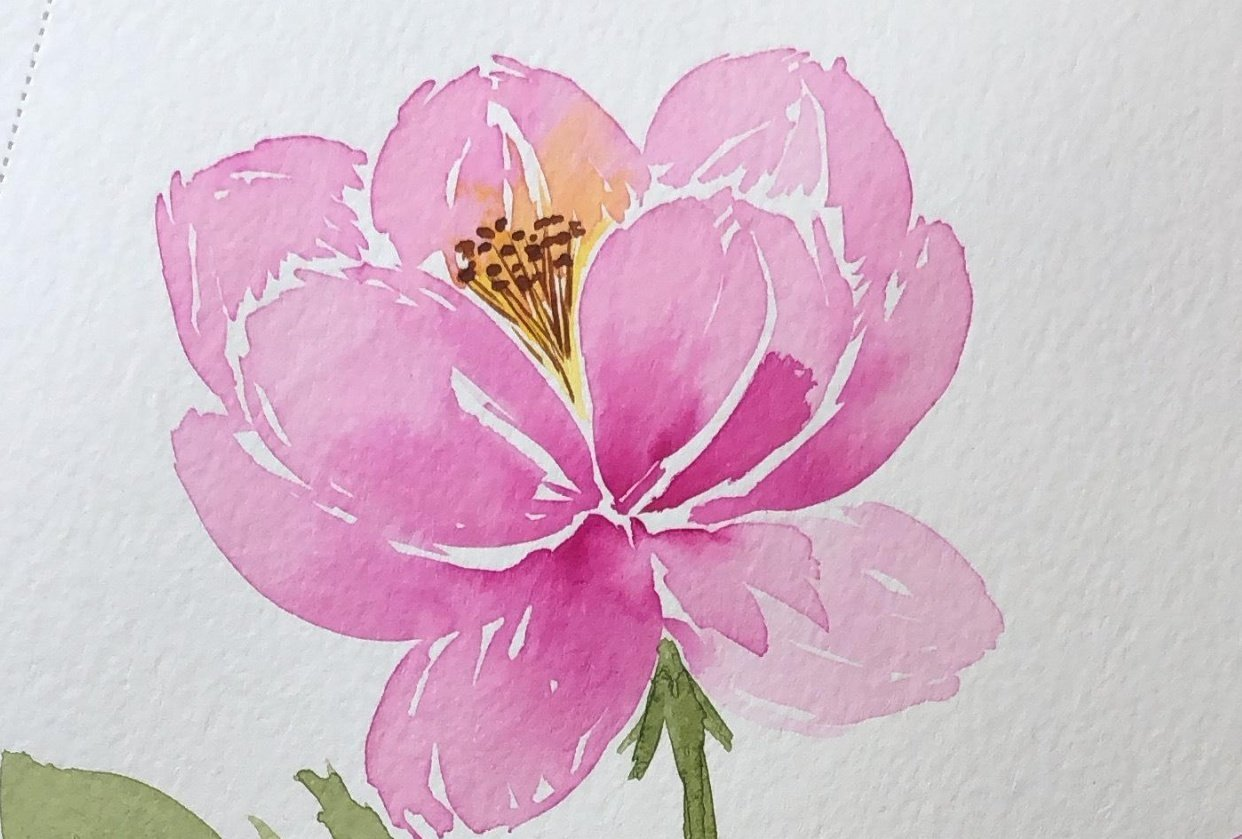 Peonies with Joly - student project