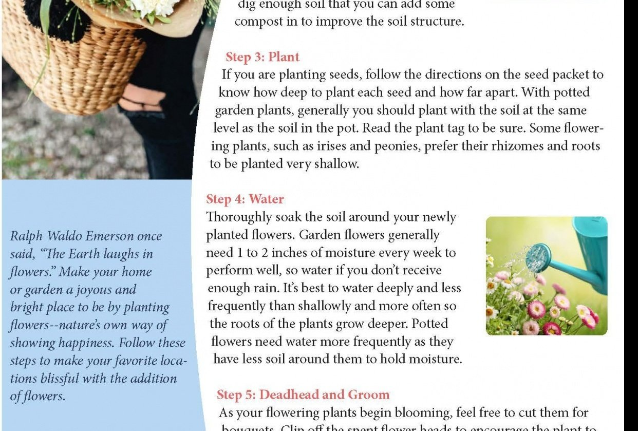 Newsletter Layout - student project