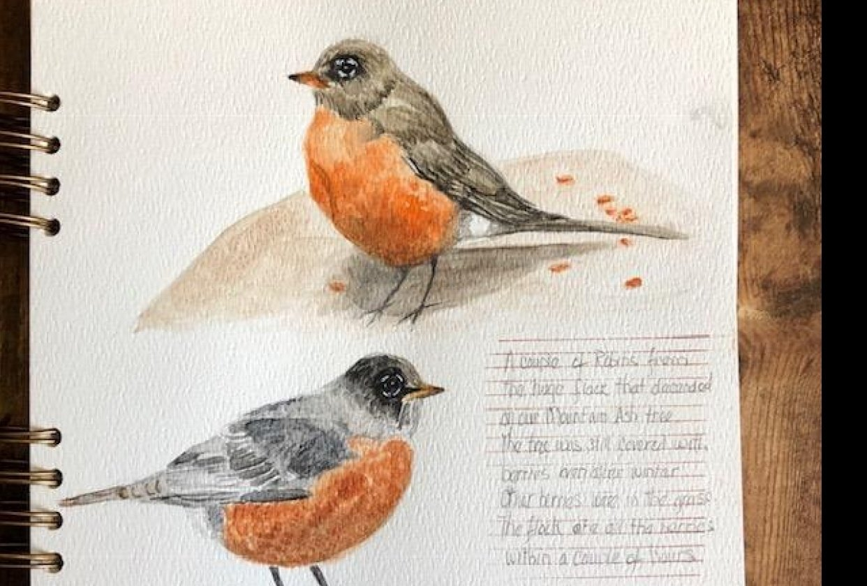 A Flock of Robins - student project