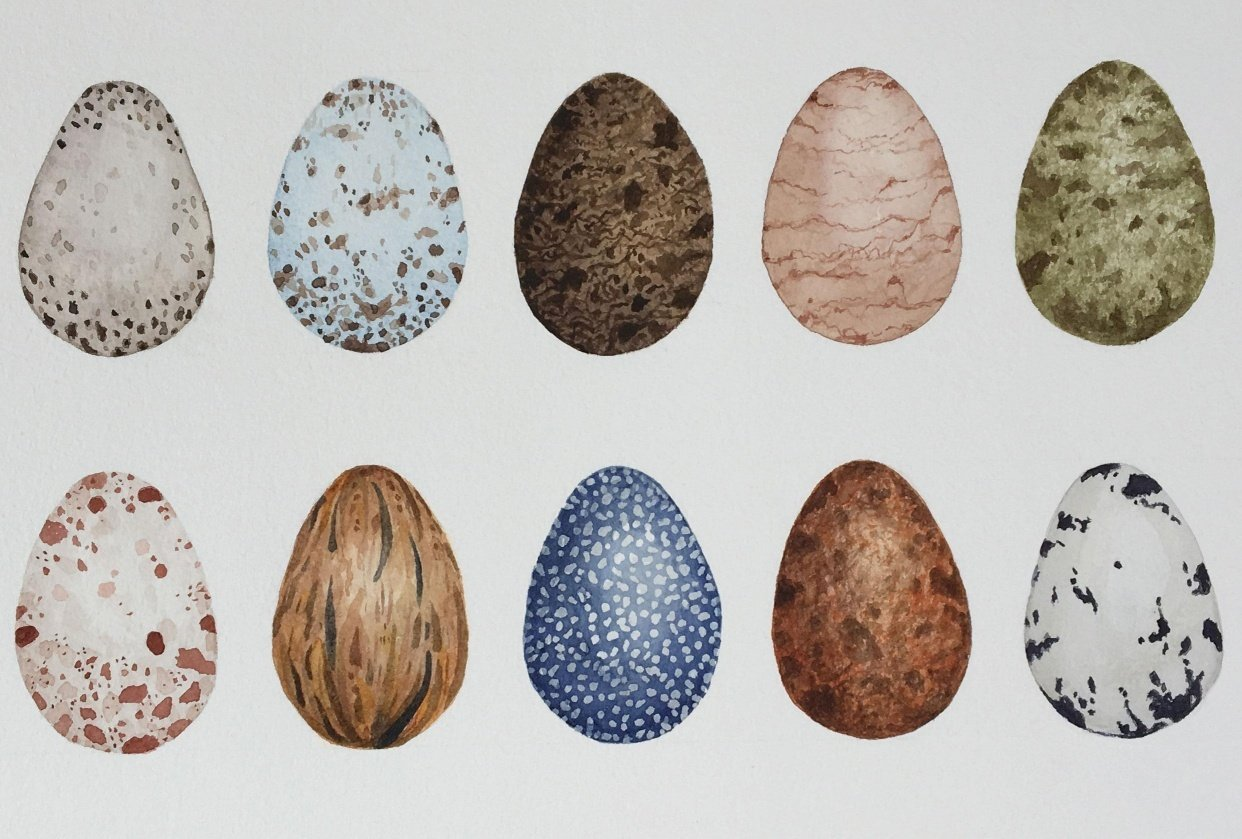 """10 bird eggs from """"Create Textures in Watercolor: How to Paint Bird Eggs"""" - student project"""