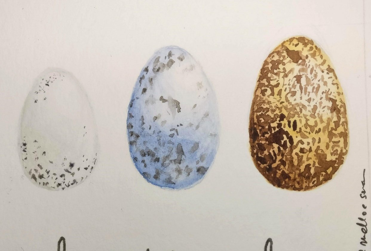 Smaller version of eggs - student project