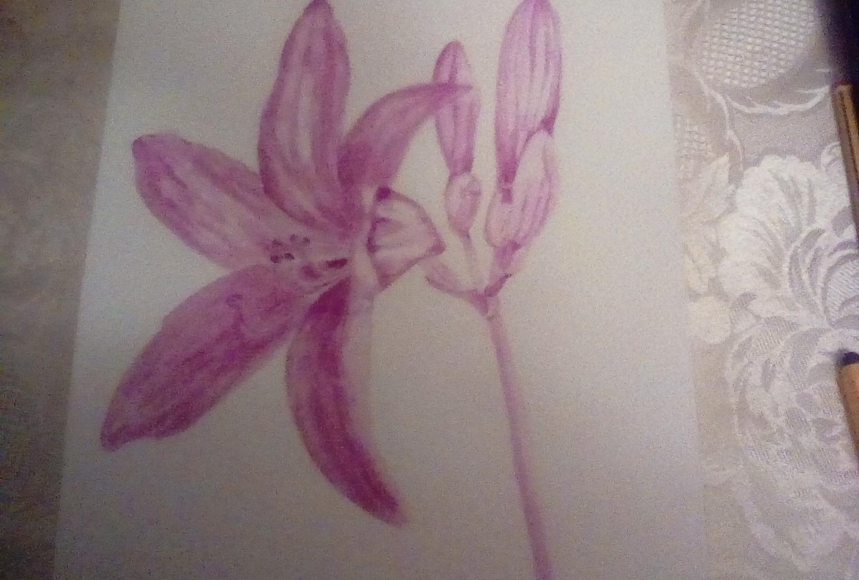 Grisaille lily - student project