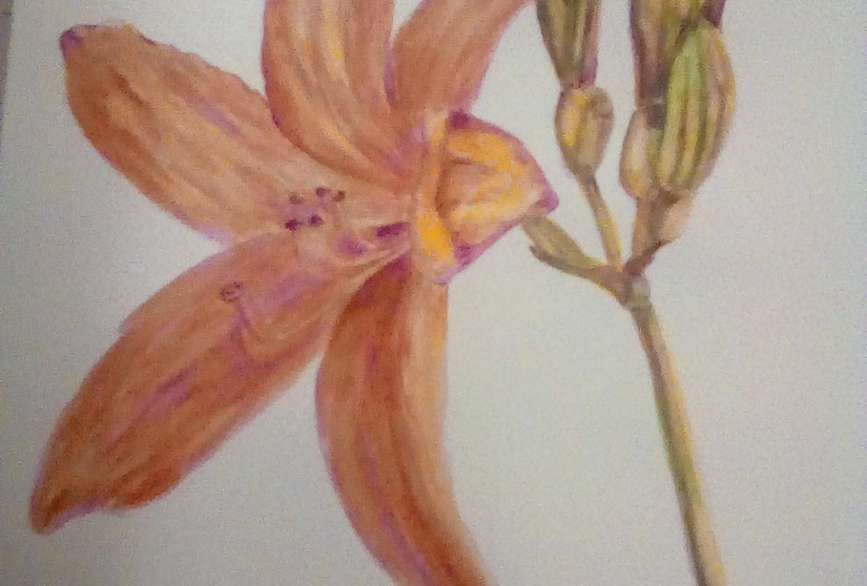 Grisaille Lily 2 - student project