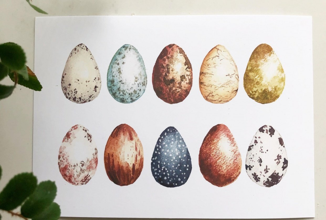 Learning Texture with Bird Eggs - student project