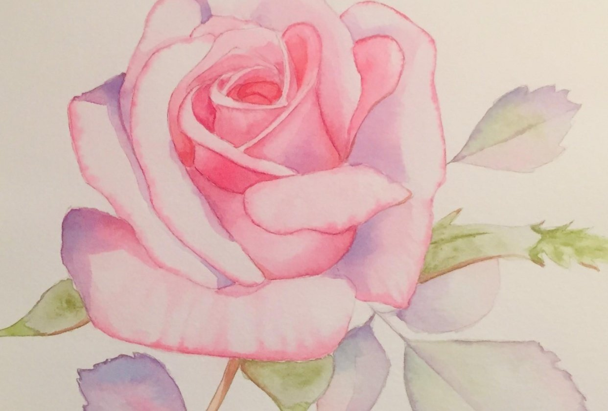 Watercolor Pink Rose for Louse De Masi's Class - student project