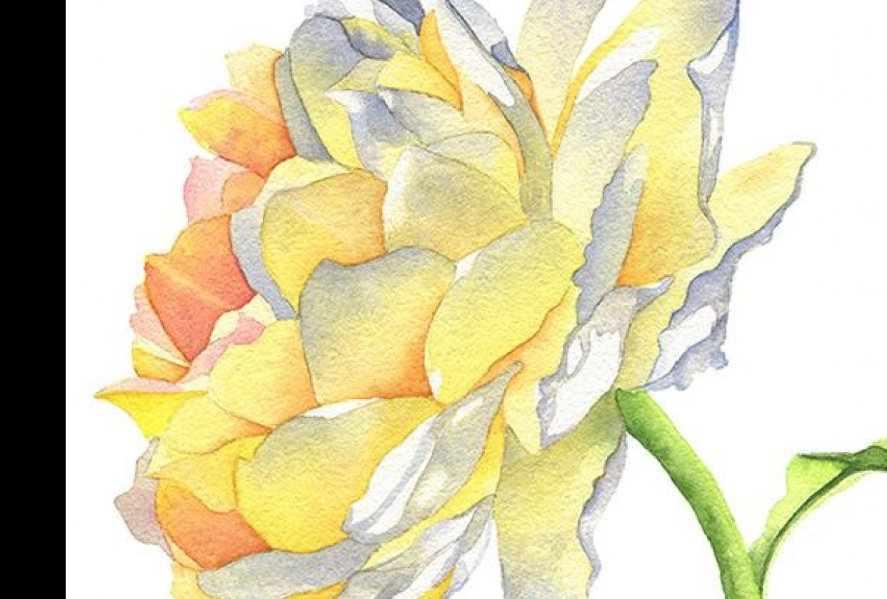 Yellow Rose Watercolor - student project