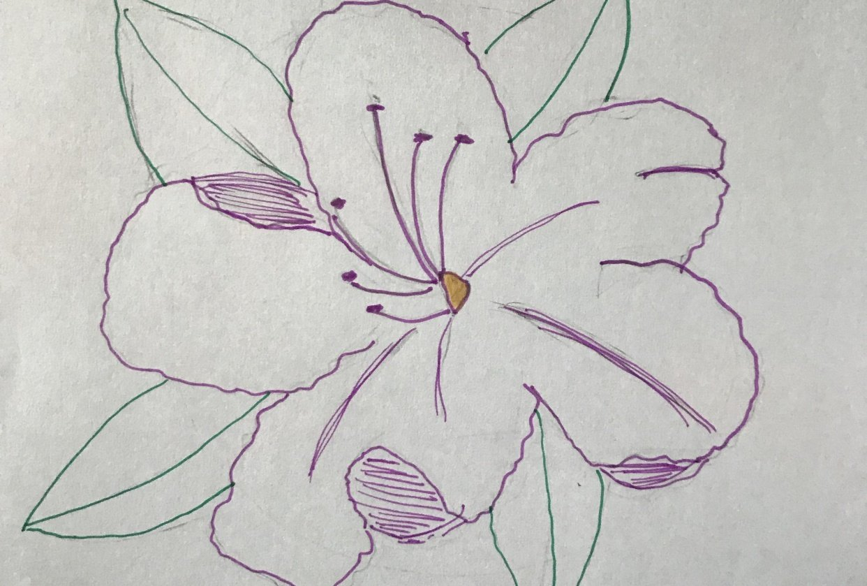 Rhododendron Sketch - student project