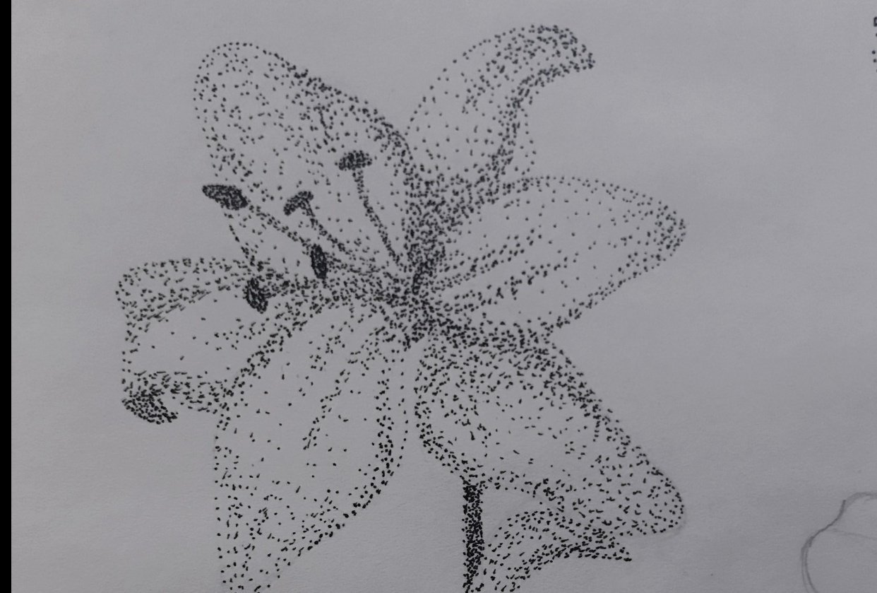 Lily stippling - student project