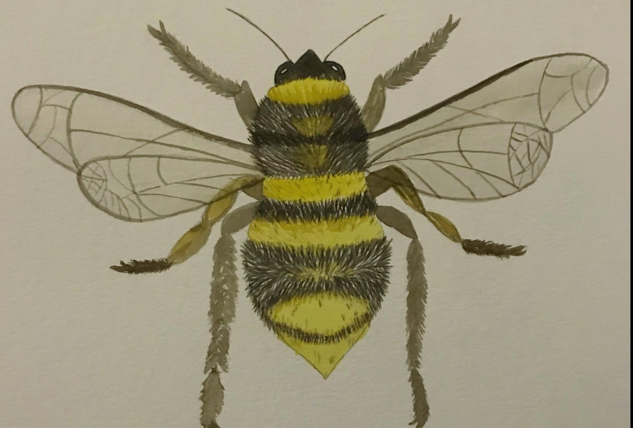 My bee! - student project