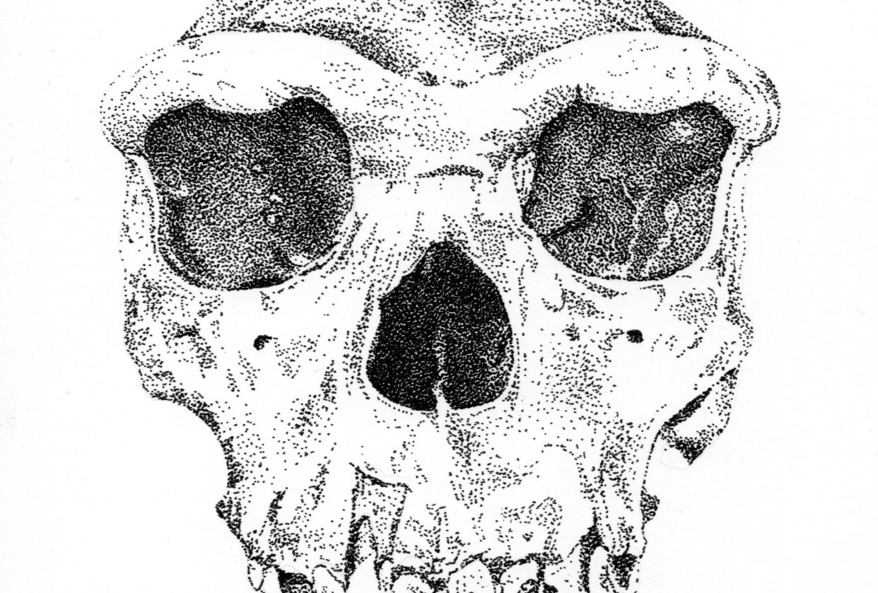 Homo heidelbergensis - student project