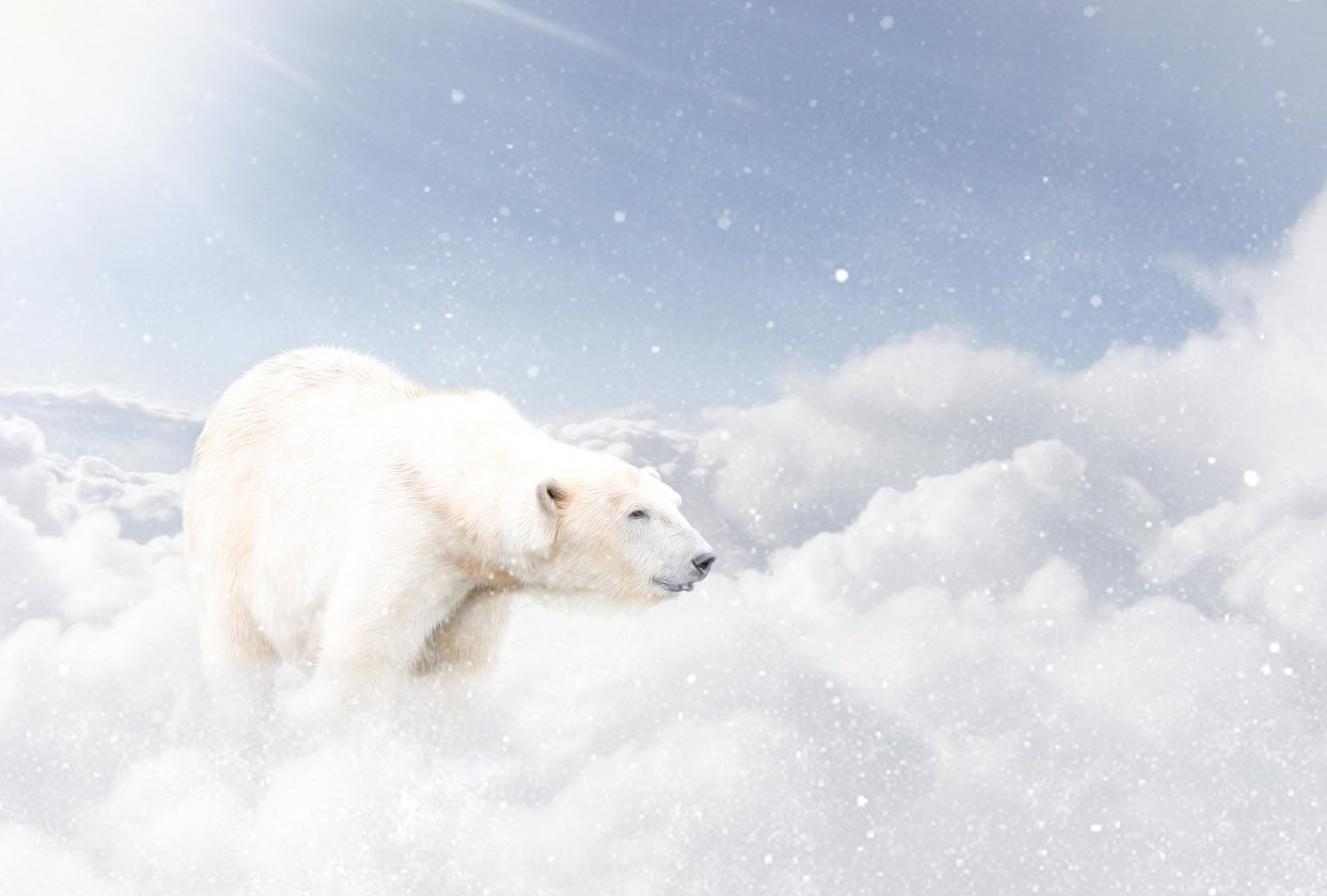 Polar in the sky - student project
