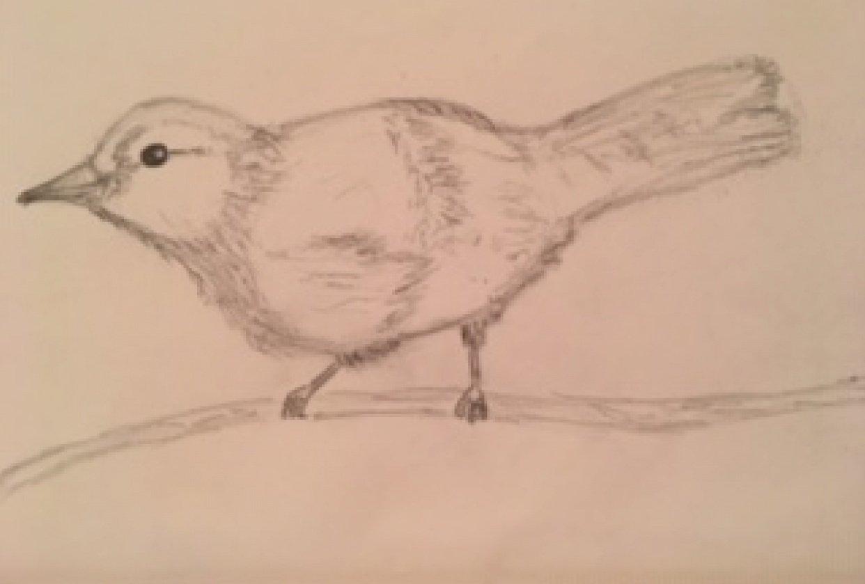 My 1st little bird - student project