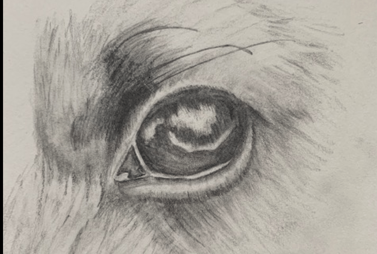Dog Eye Drawing - student project