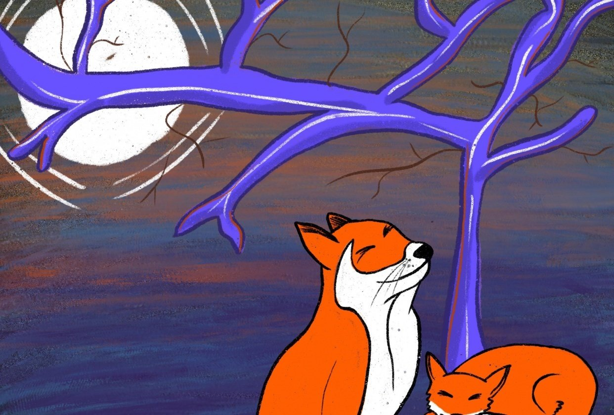 Foxes - student project