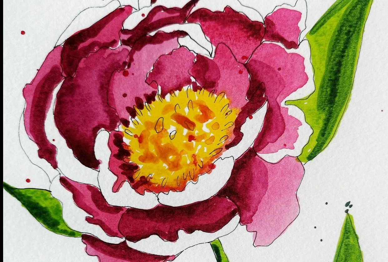 Peonies - student project