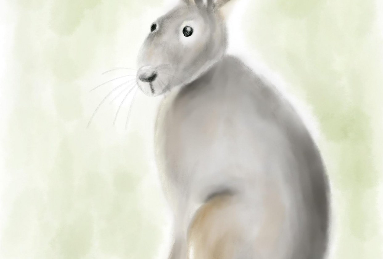 Hare's to you! - student project