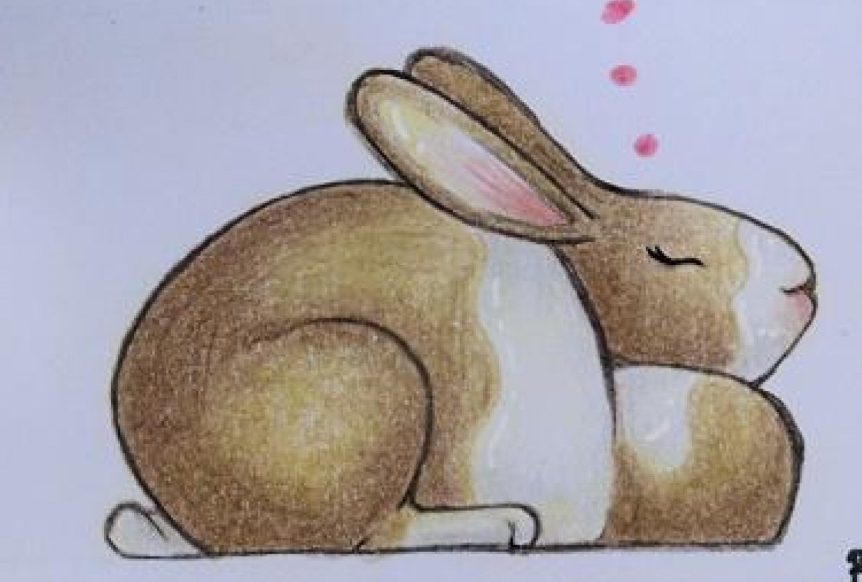 More bunnies to come! - student project