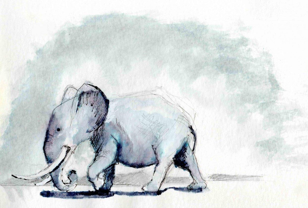 Elephant brush pen Scan - student project