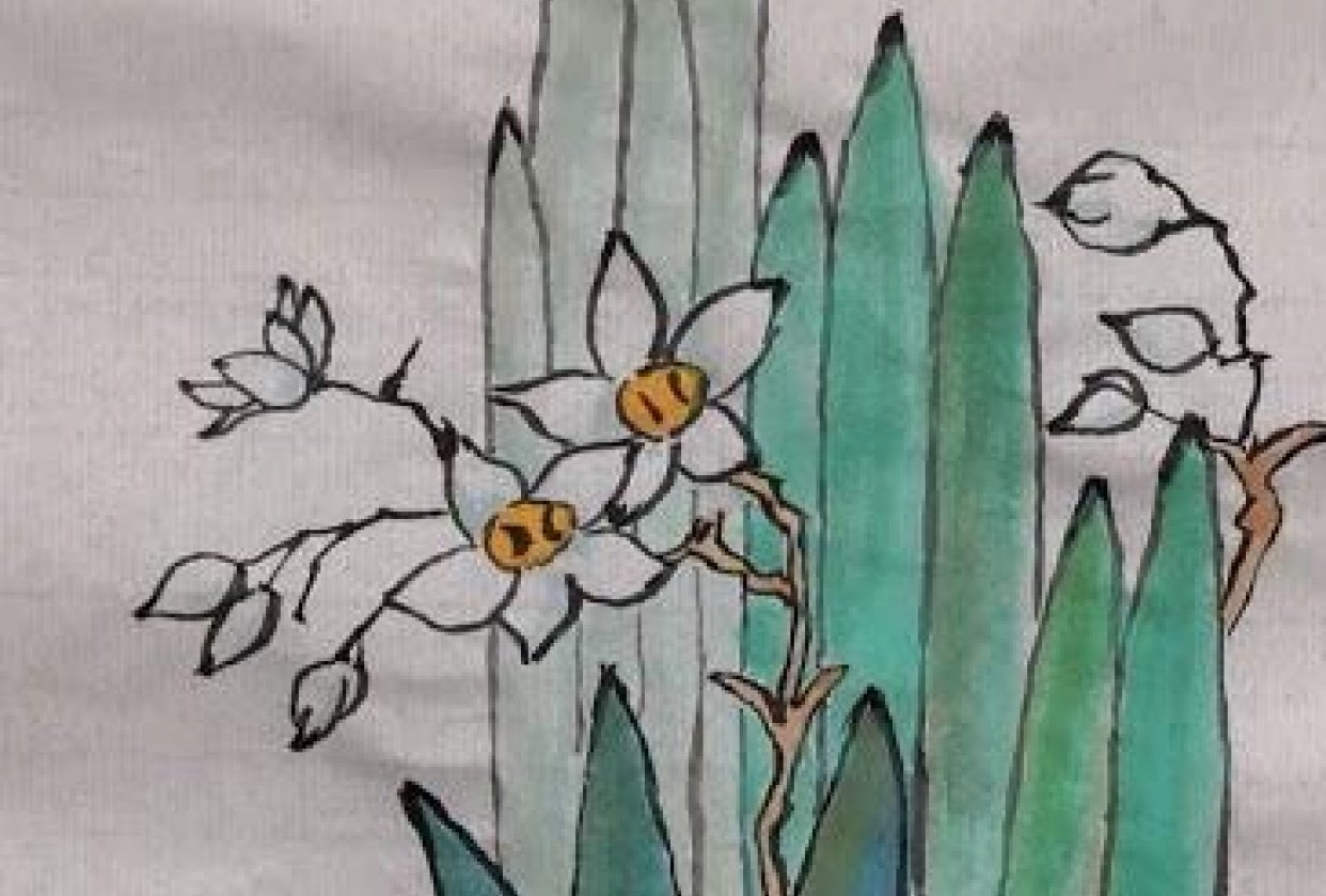 Chinese narcissus painting - student project