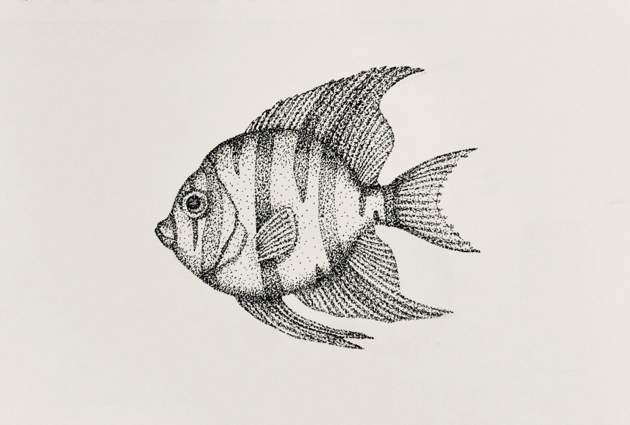 Stippling - Fish - student project