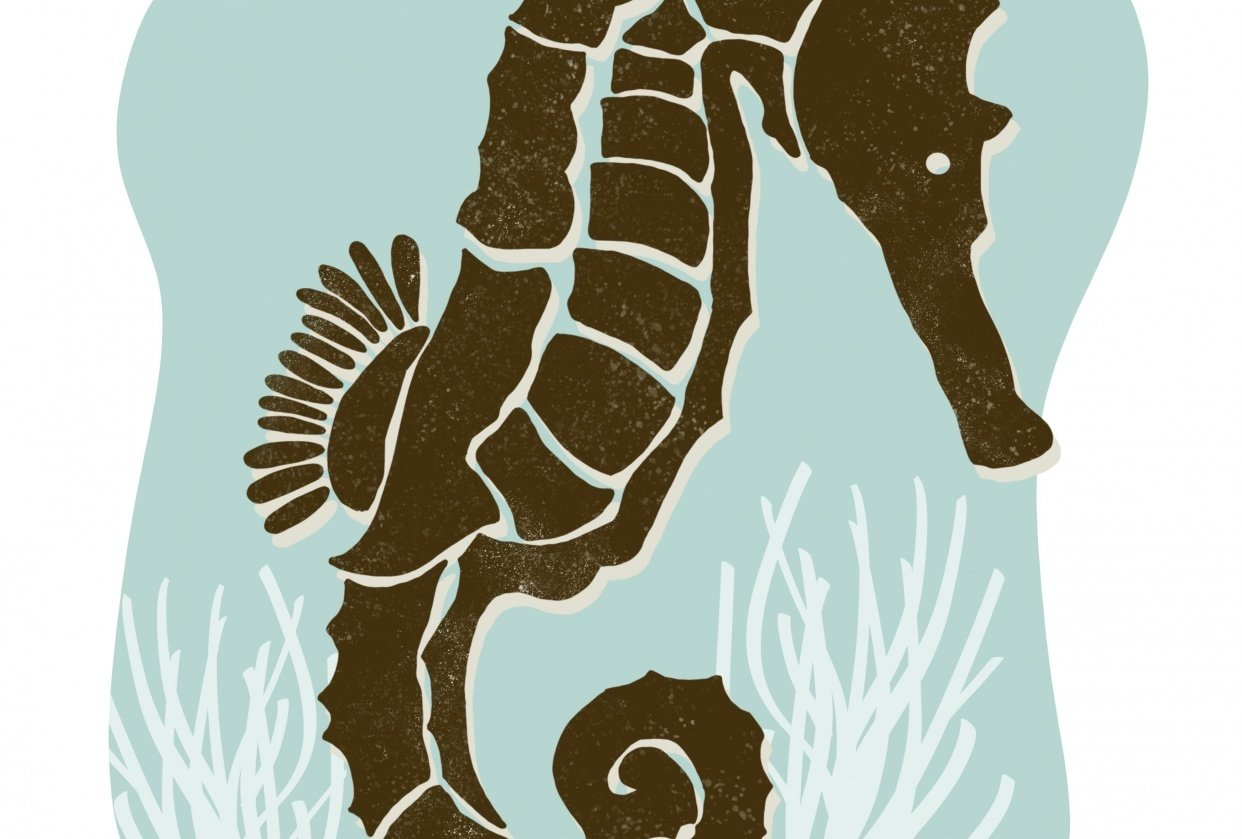 Seahorse - student project