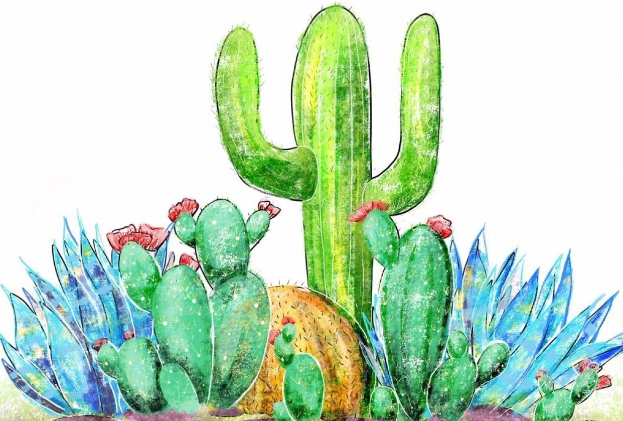 Cactus Garden - student project