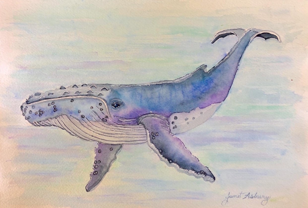 Watercolor Humpback Whale with background painting - student project