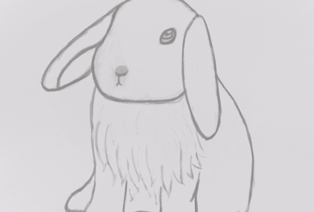 Rabbit - student project
