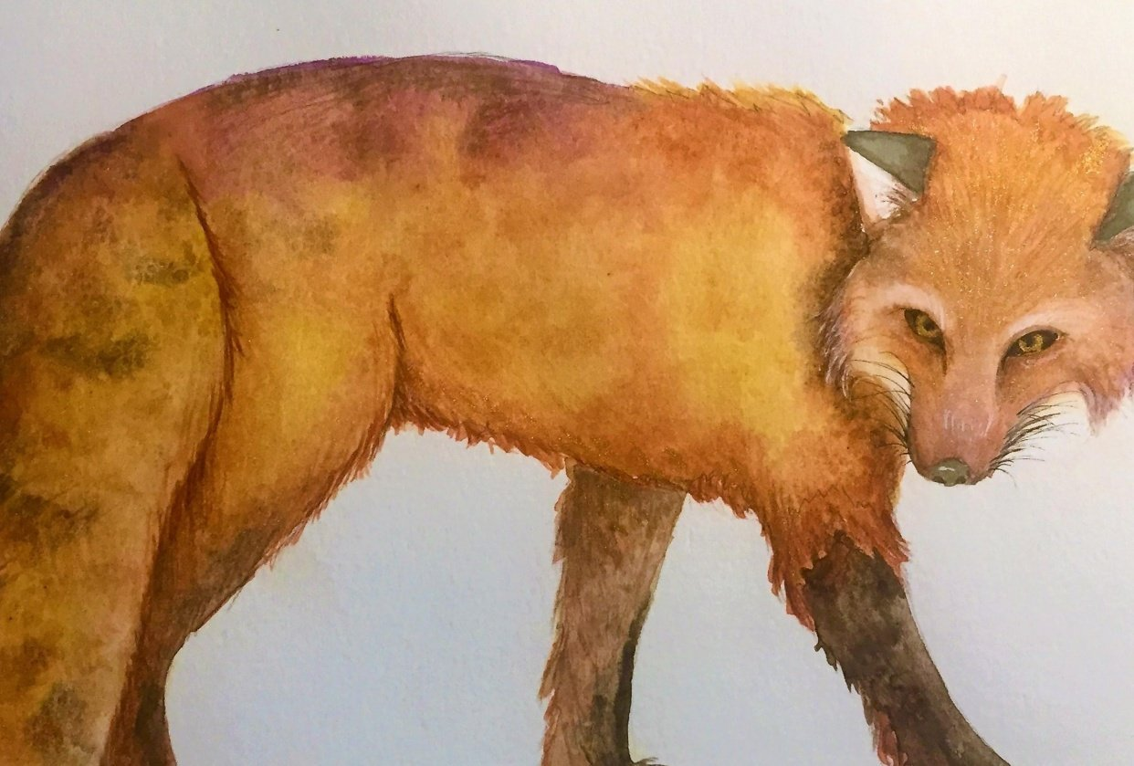 Fox with Texture for Louise De Masi - student project