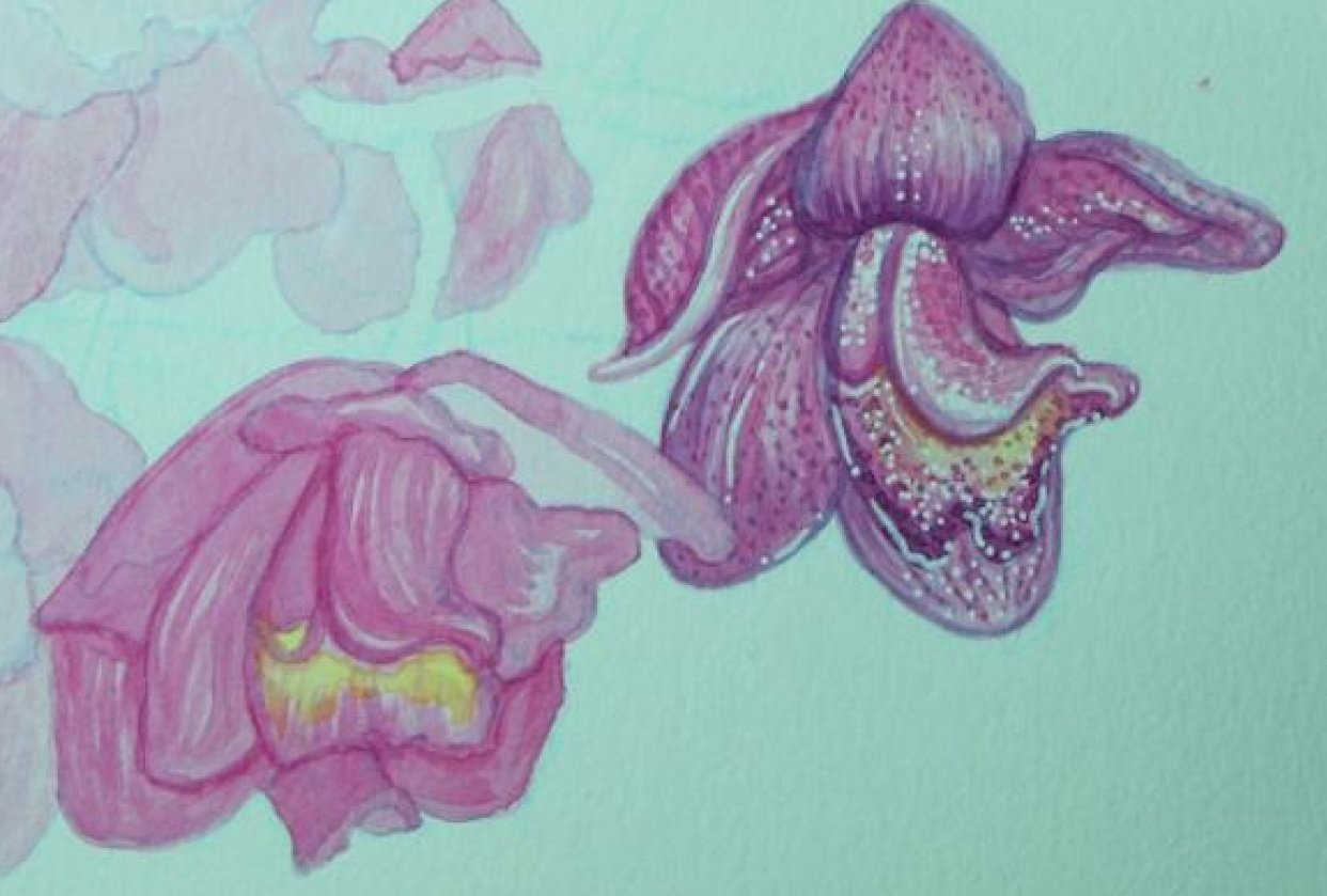 Watercolor orchids - student project