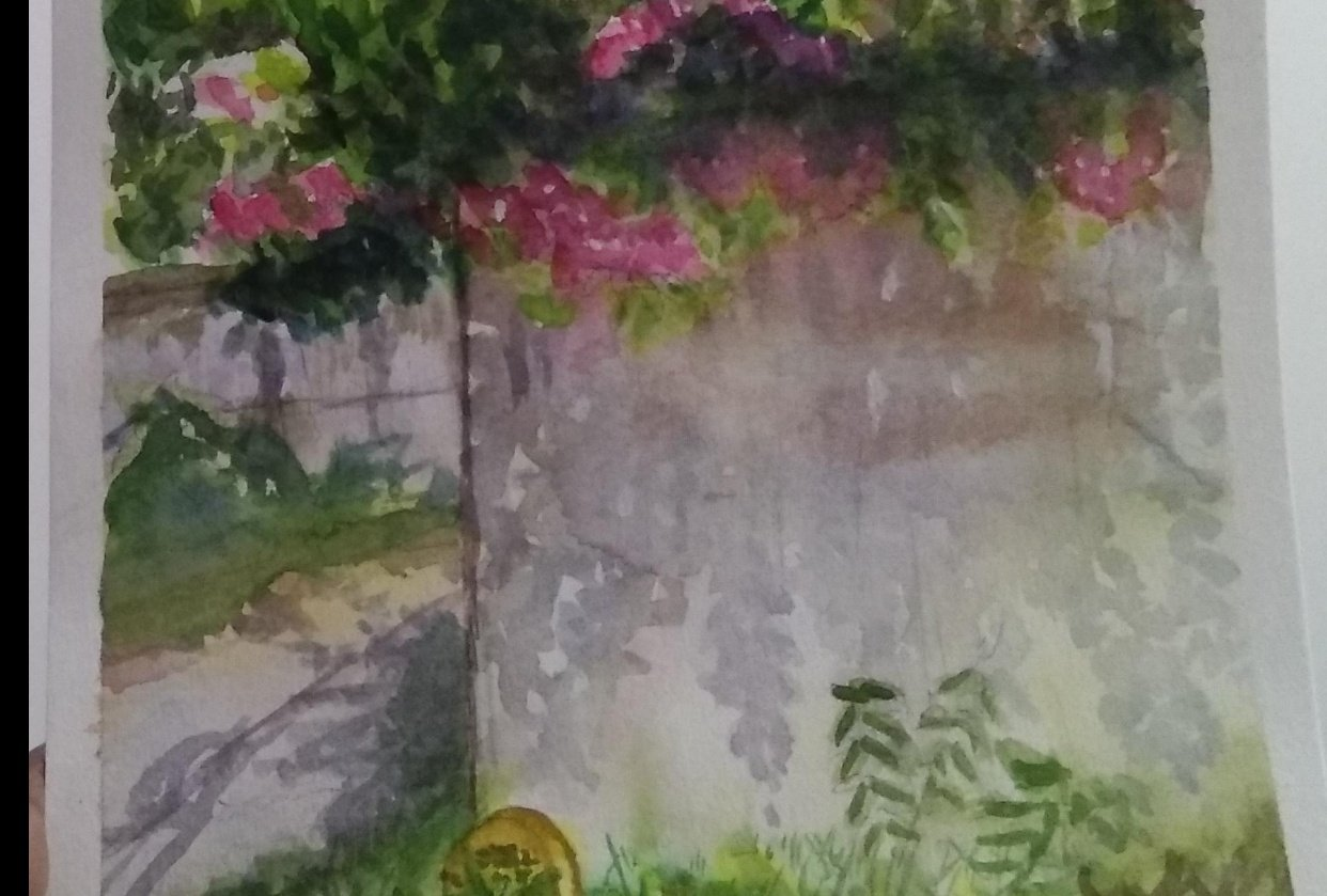 Bougainvillea on a hot summer day - student project