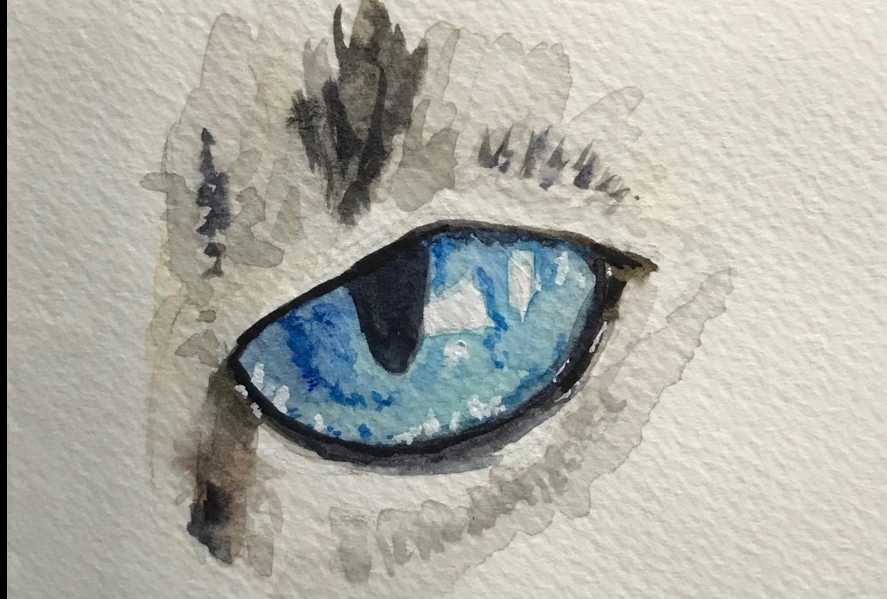 Eye practice - student project