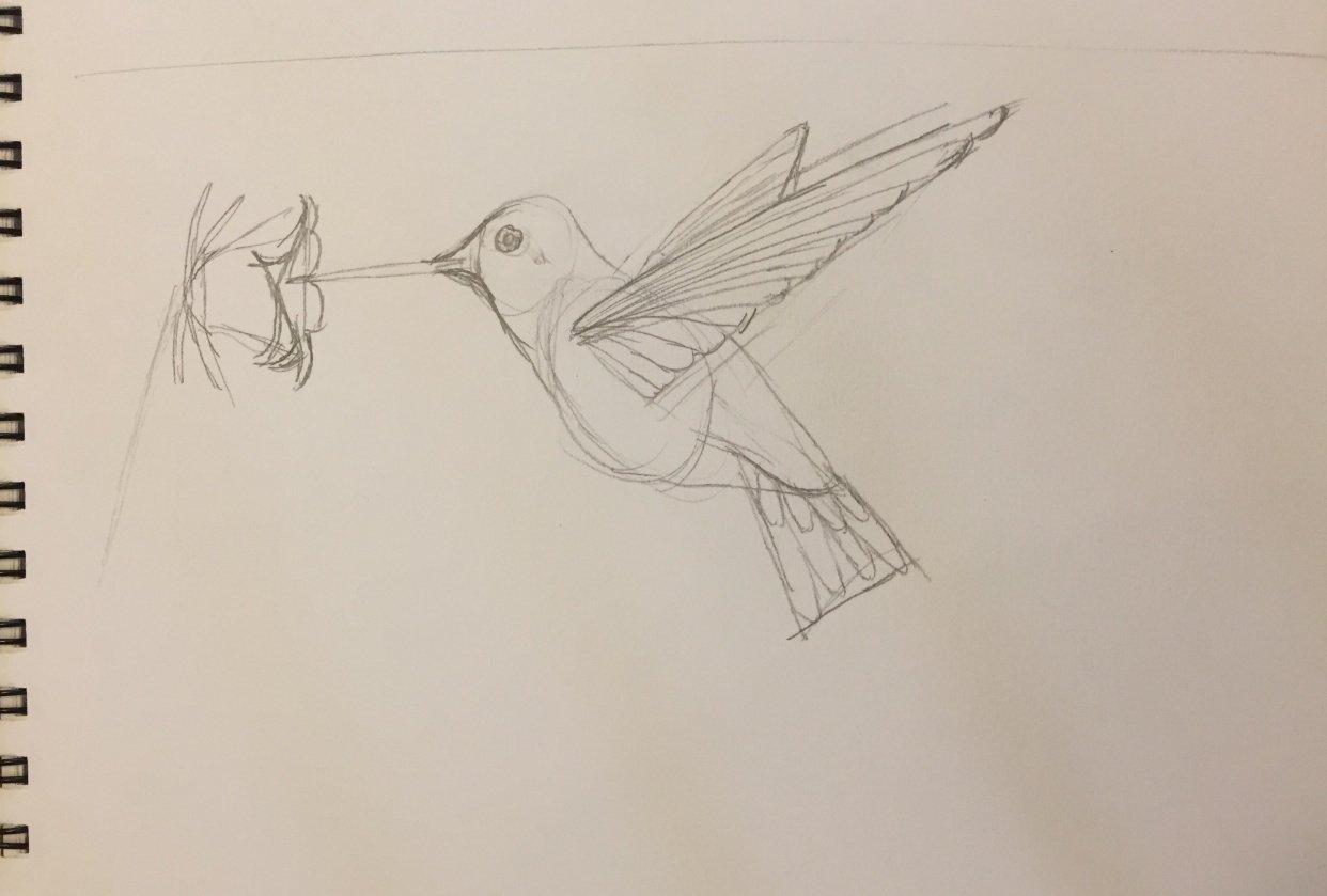 Hummingbird Drawing - student project