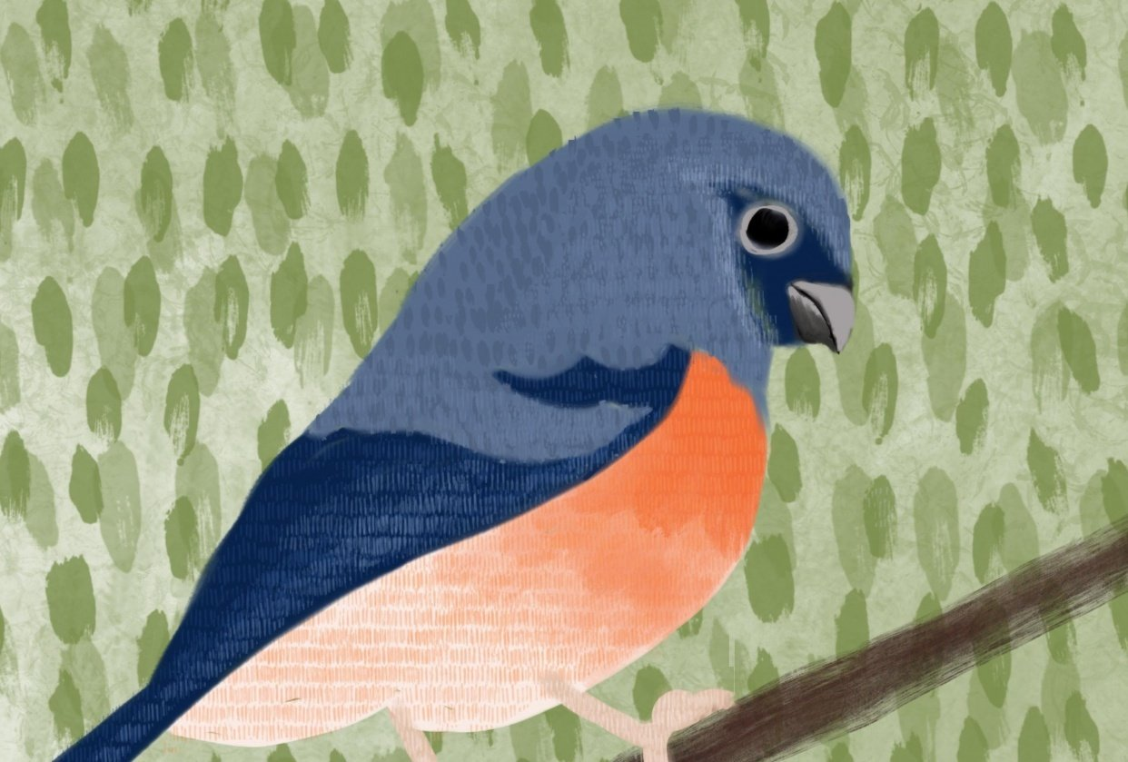 Textured Finch - student project