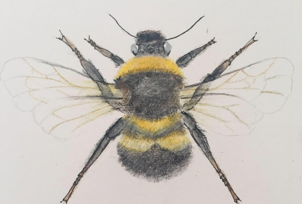 Bumble bee - student project