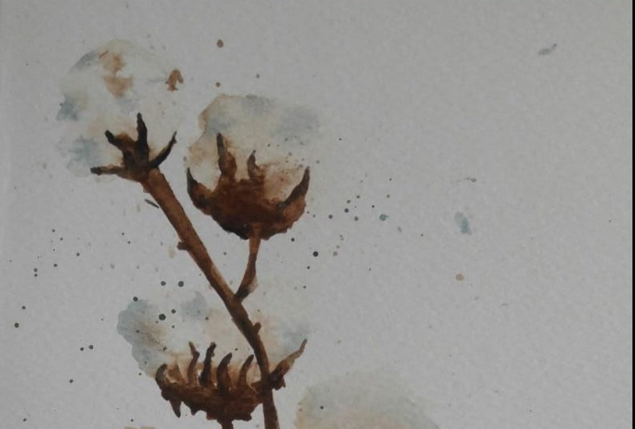 Cotton stalk - student project