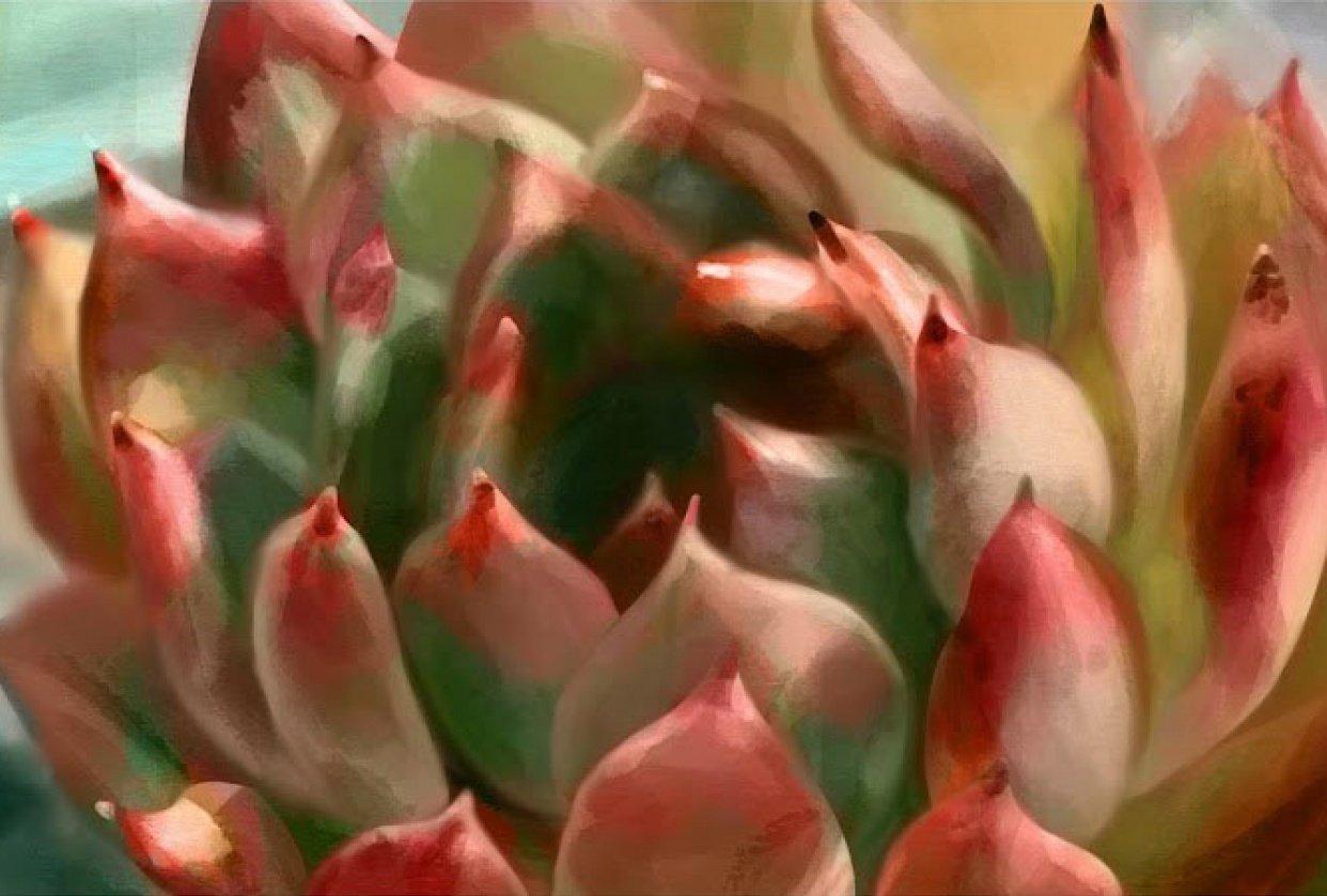 Succulent digital painting (procreate on iPad) - student project