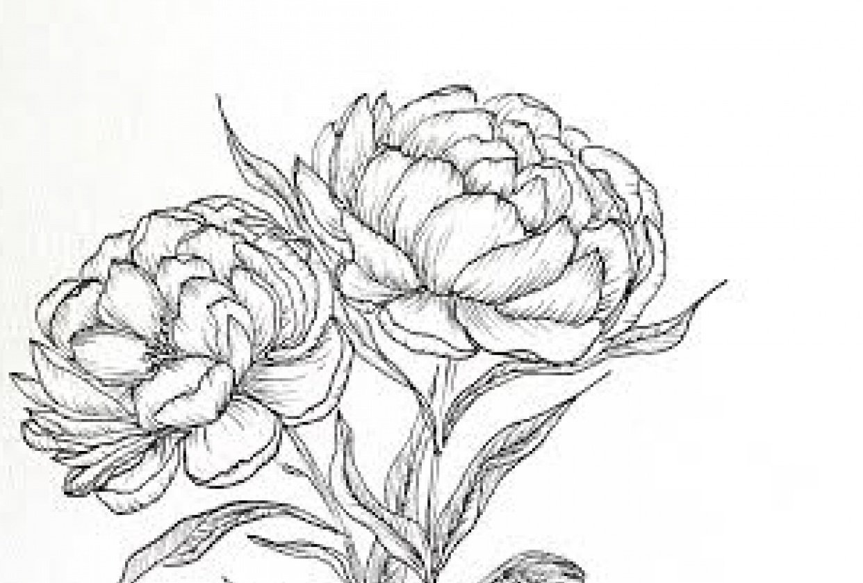Pretty Peonies - student project