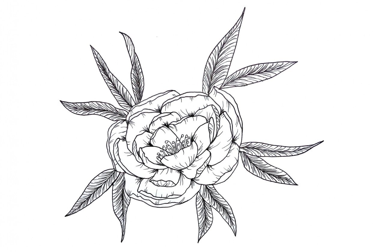 Peony line drawing - beginner - student project