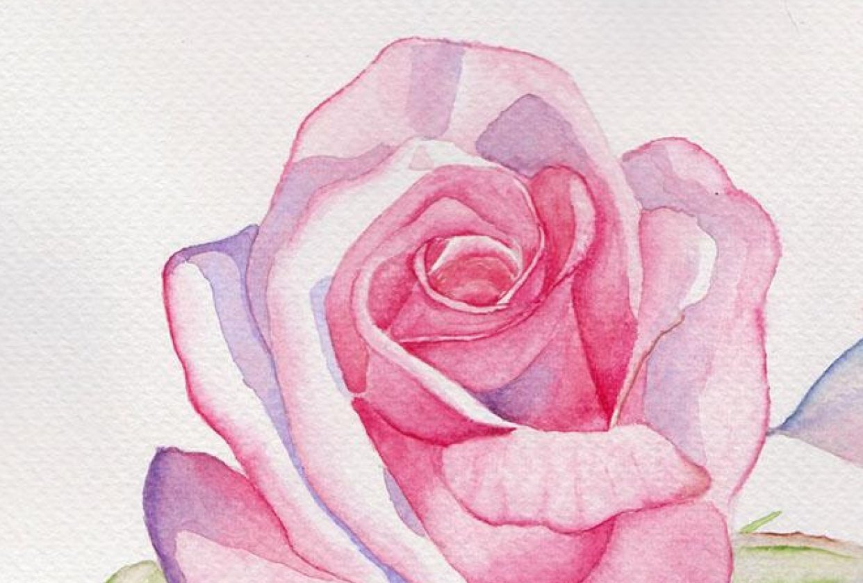 My second watercolour: A rose - student project