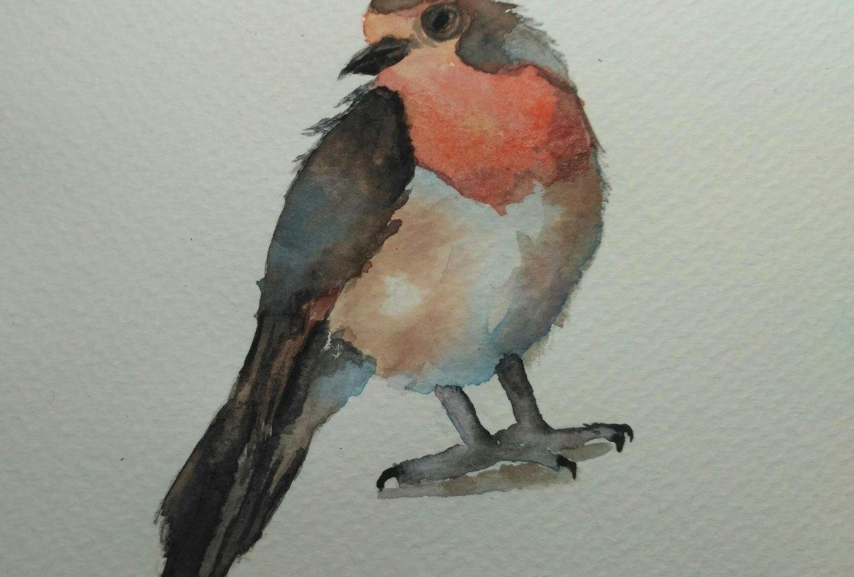 Robin bird - student project