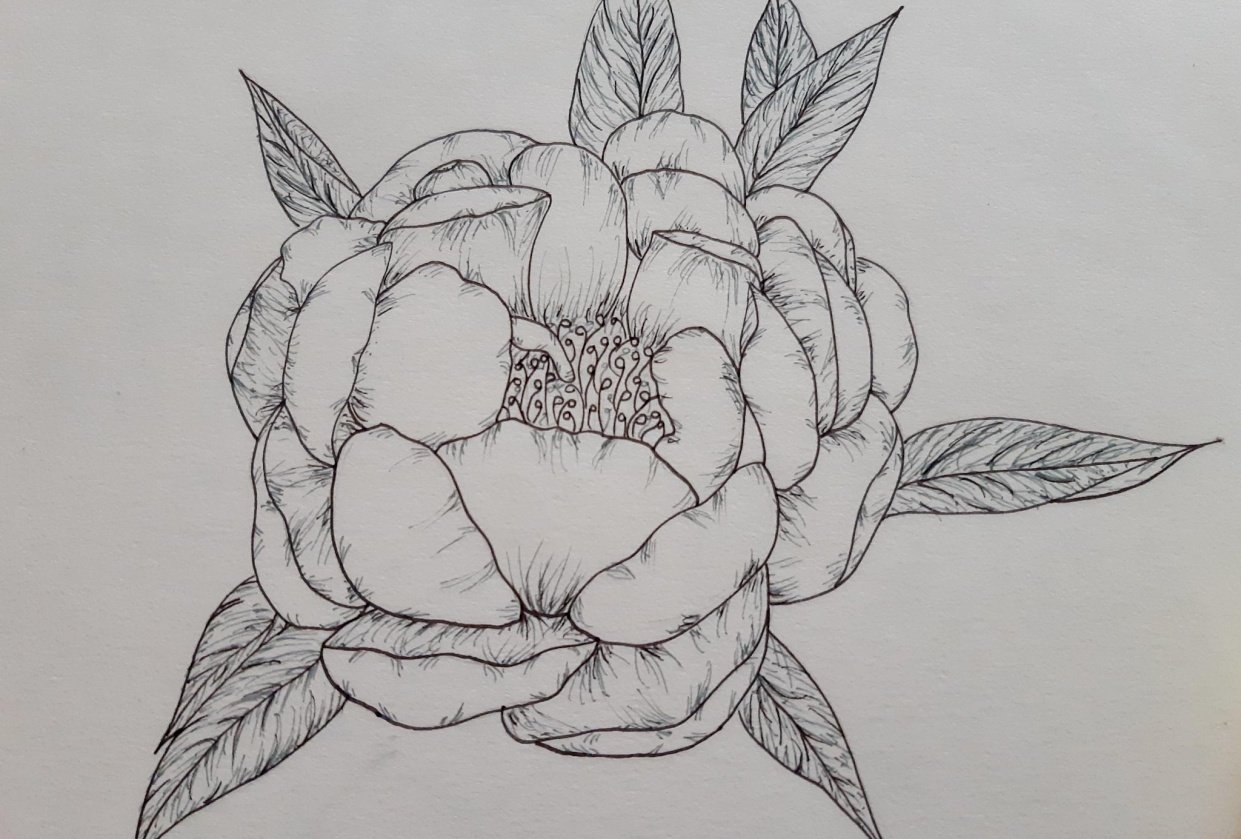 Line Drawing - Peony - student project